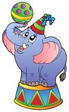 Elefante do circo dos desenhos animados Foto de Stock