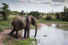 Elefante do furo molhando imagem de stock royalty free