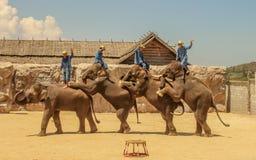 Elefante do grupo da mostra de Editorial-4th no assoalho no jardim zoológico foto de stock