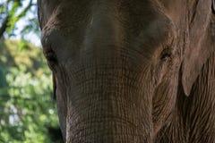 Elefante do parque no jardim zoológico de Mysore fotografia de stock