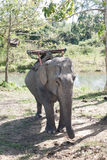 Elefante do transporte Imagem de Stock