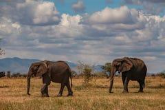 Elefante dois no parque nacional de Tarangire fotos de stock