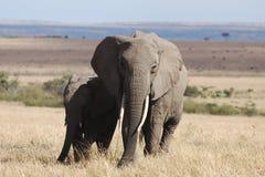 Elefante e bambino Fotografie Stock Libere da Diritti