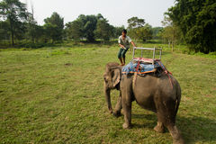 Elefante e cavaliere, parco nazionale di Chitwan, Chitwan, Nepal Immagini Stock
