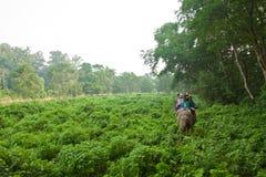 Elefante e cavalieri, parco nazionale di Chitwan, Chitwan, Nepal Fotografie Stock