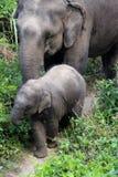 Elefante e madre del bambino fuori per una passeggiata Fotografia Stock