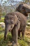 Elefante e sua criança Fotografia de Stock