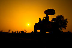 Elefante e tramonto con la scena di tramonto Fotografie Stock Libere da Diritti