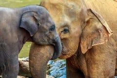 Elefante ed elefante del bambino Fotografia Stock