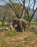Elefante ed il suo bambino Fotografia Stock