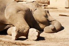 Elefante el dormir imágenes de archivo libres de regalías