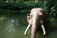 Elefante em Disneylândia Fotografia de Stock