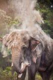 Elefante em Nepal Fotografia de Stock