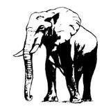 Elefante em preto e branco, o gráfico da mão Fotografia de Stock Royalty Free