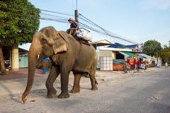 Elefante em Sihanoukville Fotografia de Stock Royalty Free