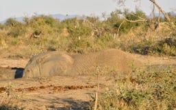 Elefante em um furo da lama Fotos de Stock Royalty Free