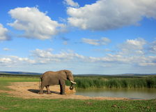 Elefante em Waterhole Foto de Stock Royalty Free