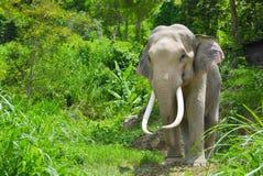 Elefante en bosque Imagenes de archivo