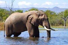 Elefante en el agua Fotografía de archivo libre de regalías