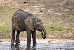 Elefante en el borde del río imagen de archivo