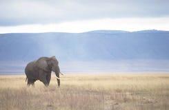 Elefante en el cráter de Ngorongoro Fotos de archivo libres de regalías