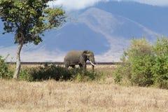 Elefante en el cráter de Ngorongoro Fotografía de archivo