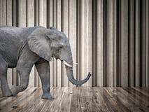 Elefante en el cuarto foto de archivo libre de regalías