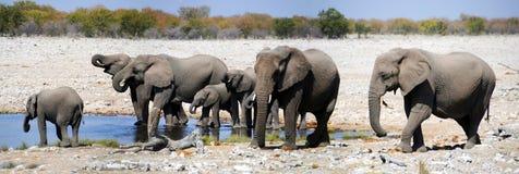 Elefante en el parque nacional de Etosha Fotografía de archivo libre de regalías