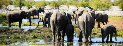 Elefante en el parque nacional de Etosha Foto de archivo libre de regalías