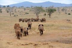 Elefante en el parque nacional de Kenia Imagen de archivo