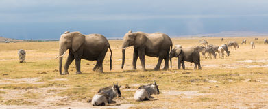 Elefante en el parque nacional Kenia Fotos de archivo