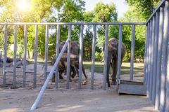 Elefante en el parque zoológico fotos de archivo libres de regalías