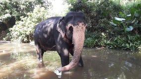 Elefante en el río Foto de archivo libre de regalías