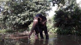 Elefante en el río Fotos de archivo libres de regalías
