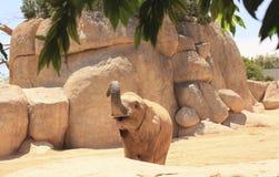 Elefante en el salvaje fotos de archivo libres de regalías