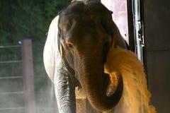 Elefante en la arena que lanza del parque zoológico nacional imagen de archivo
