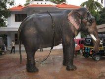 Elefante en la India Imágenes de archivo libres de regalías