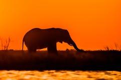Elefante en la puesta del sol Fotografía de archivo