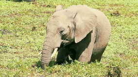 Elefante en Masai Mara almacen de metraje de vídeo