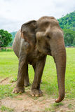 Elefante en parque de naturaleza protegido imágenes de archivo libres de regalías
