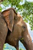 Elefante en parque de naturaleza protegido fotografía de archivo libre de regalías