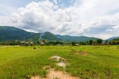 Elefante en parque de naturaleza protegido foto de archivo libre de regalías
