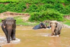 Elefante en parque de naturaleza protegido imagen de archivo