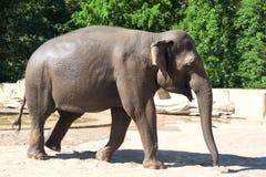 Elefante en parque zoológico foto de archivo