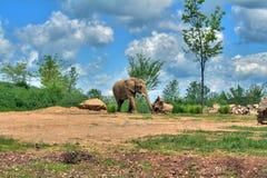 Elefante en sabana Fotos de archivo libres de regalías