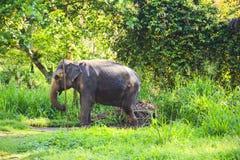 Elefante en un cuarto de niños del elefante contra un fondo de la naturaleza tropical, Sri Lanka Imágenes de archivo libres de regalías