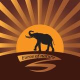 Elefante en un fondo un sol Imagen de archivo libre de regalías
