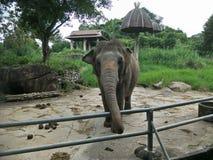 Elefante en un parque zoológico foto de archivo