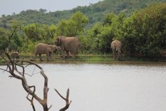 Elefante en un waterhole Imagen de archivo libre de regalías