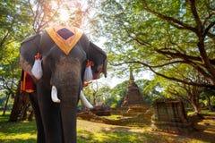 Elefante en Wat Nang Phaya Temple en el parque histórico del Si Satchanalai en Sukhothai, Tailandia Imagen de archivo